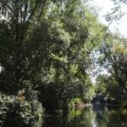 Fluß und Bäume am Ufer