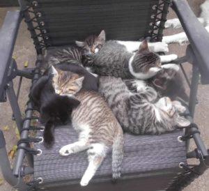 Katzen, die schlummern