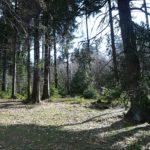 Waldlandschaft Thüringen