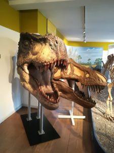 Dino-Skelett