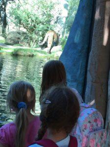 Kinder betrachten Tiger im Zoo